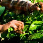 ネクストシフトファンドの「カンボジア農家さん応援ファンド4号」が満額成立|目標年利5.0パーセント・1年間運用