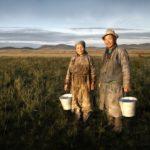 インパクト投資特化型ソーシャルレンディング【NextShiftFund】の「モンゴル農家さん応援ファンド2号」が満額成立