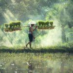 NextShiftFundが「カンボジア農家さん応援ファンド8号」をリリース|1年運用・目標年利5.0パーセント