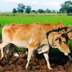 CAMPFIRE Ownersが新ファンド「カンボジア農家支援ファンド3号」を募集開始 予定年利6.0パーセント、11ヶ月運用